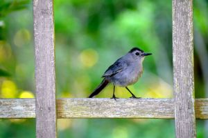 Bird in Garden